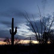 Arizona national parks and monuments, Saguaro and ocatillo cactus at twilight