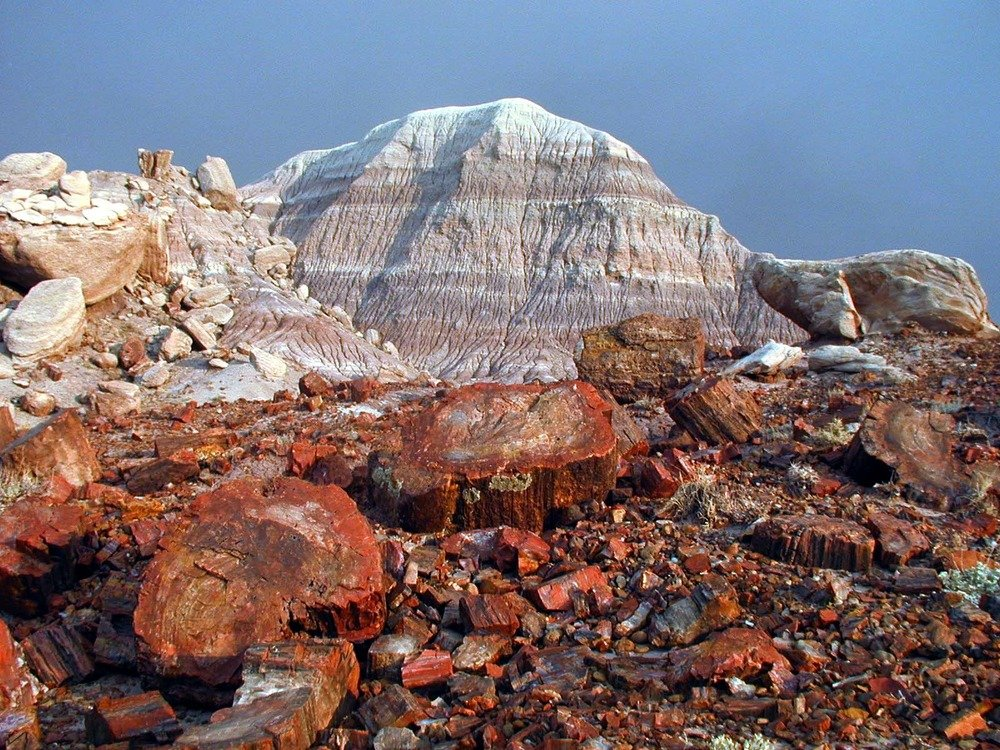 Petrified tree trunks in foreground, with badlands peak in background