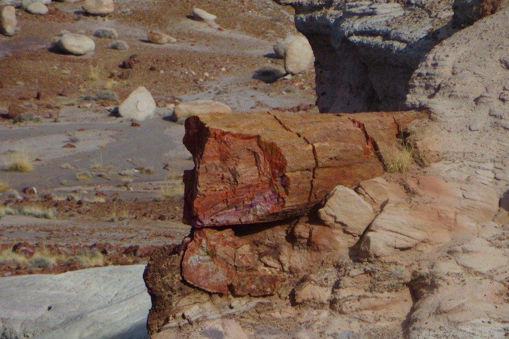 Rust-colored petrified log lying amid gray stones