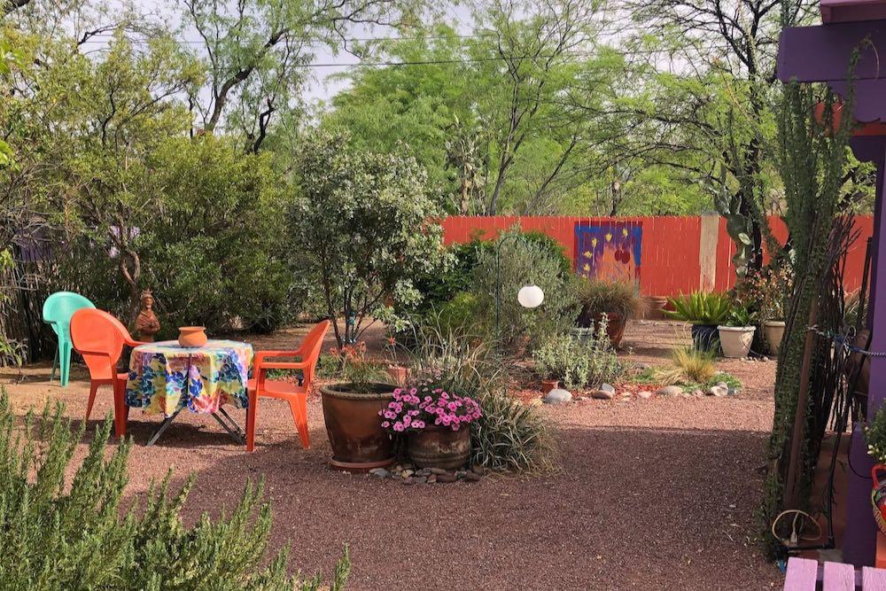 Desert garden in an Airbnb tucson arizona