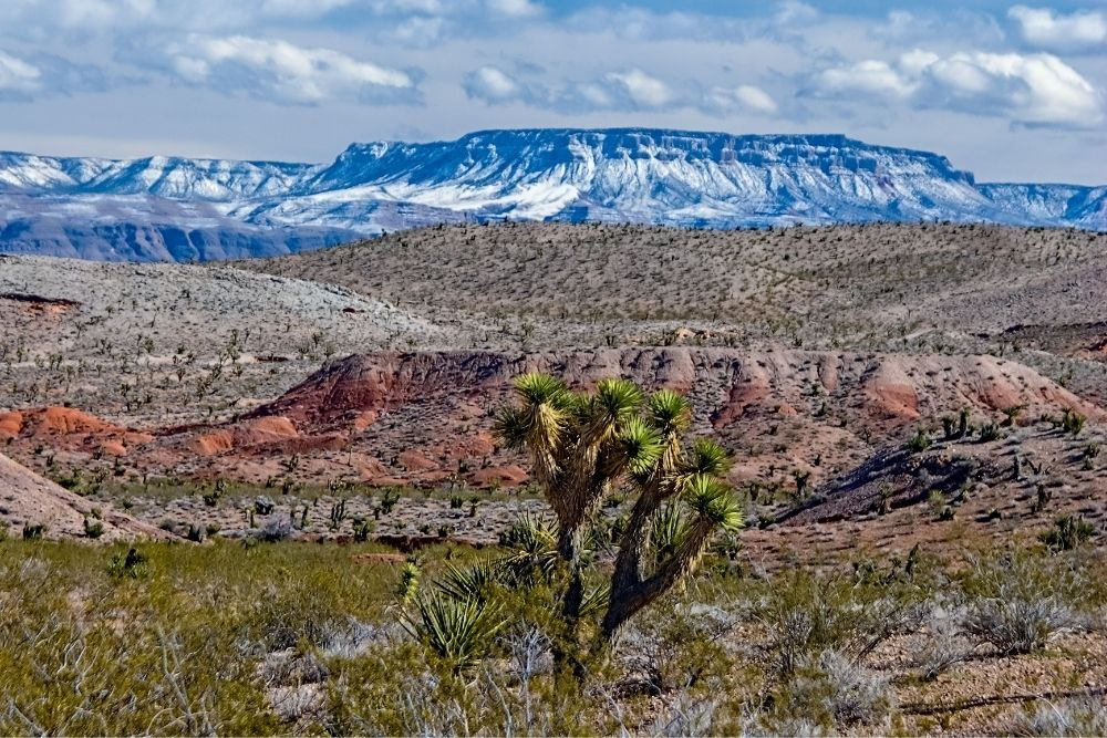 Parashant, a national monument of Arizona, with joshua tree in foreground and snow-covered mesa in background