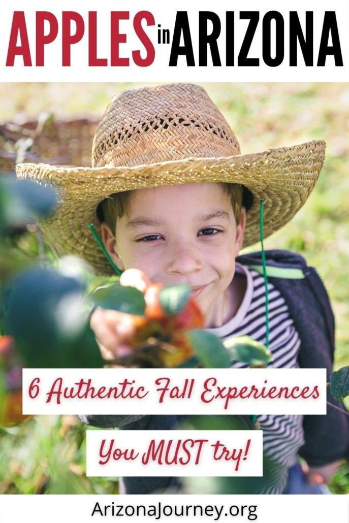 kid in cowboy hat picking apple off a tree-apples in arizona