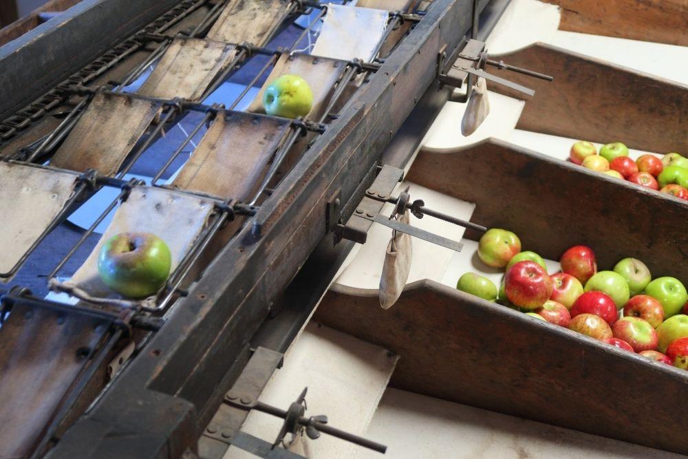 image of apple sorting equipment-apples in arizona