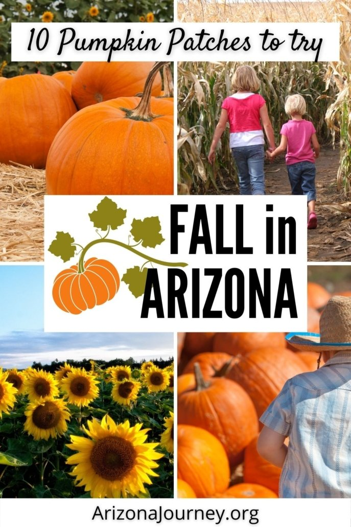 montage of pumpkin patches in Arizona-close-up of pumpkins, two girls in a corn maze, young boy amid pumpkins, field of sunflowers